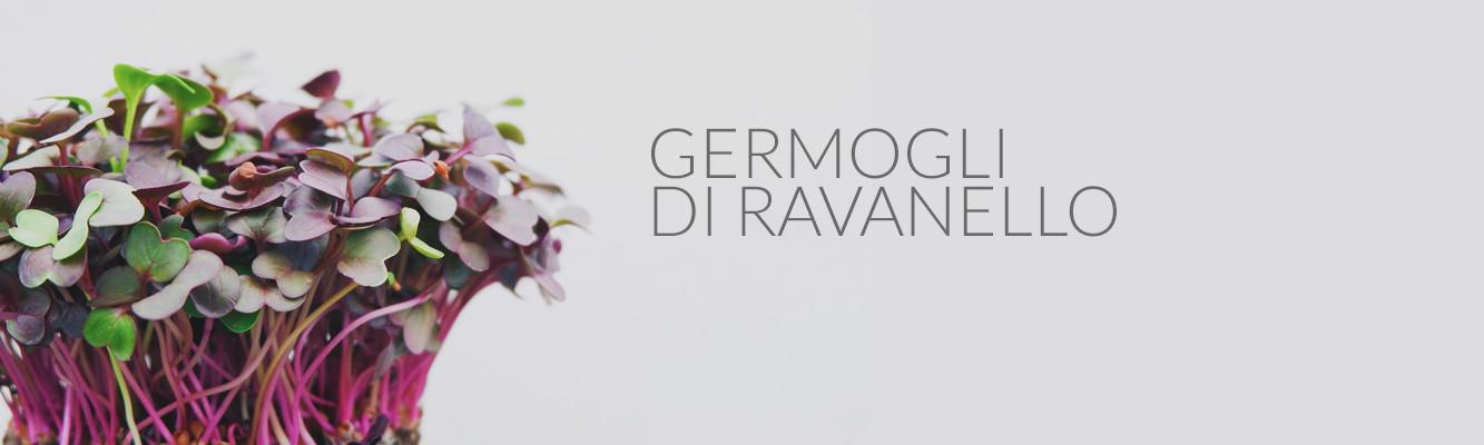 Germogli di ravanello | BeC