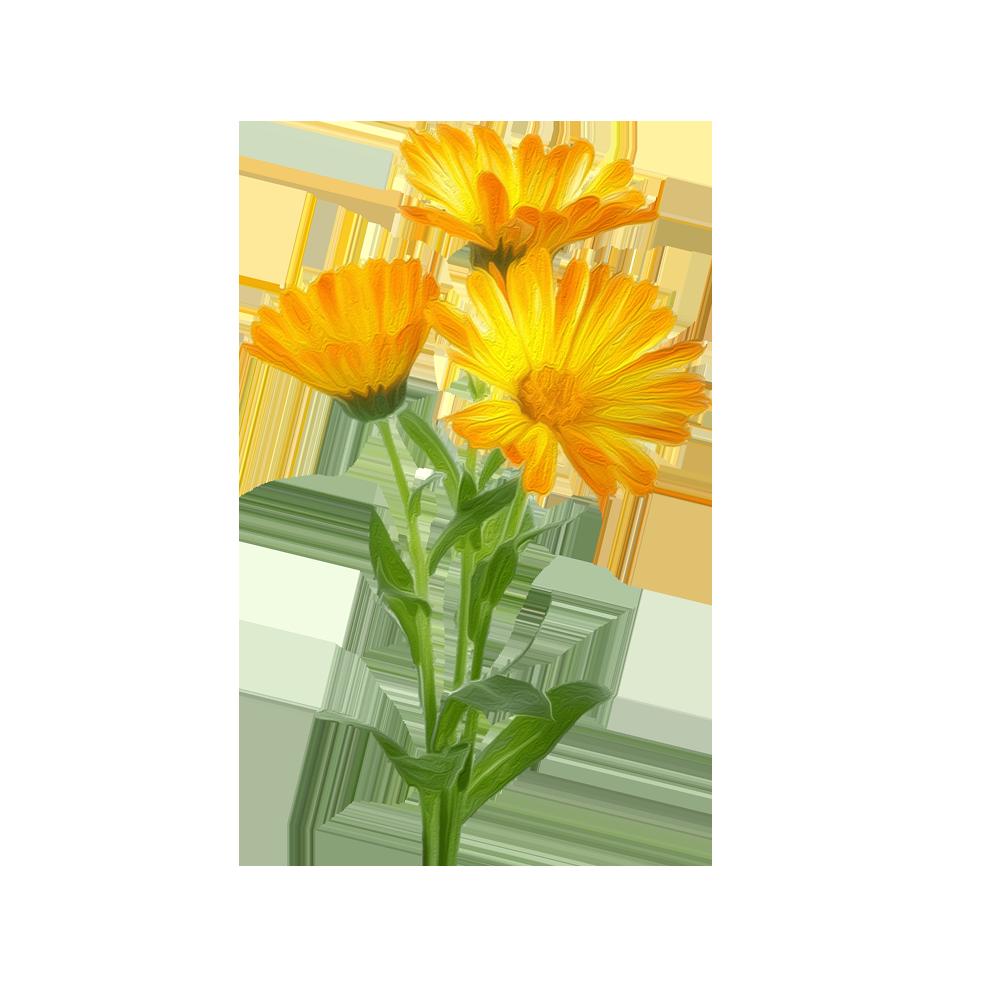 Calebdula - BeC natura
