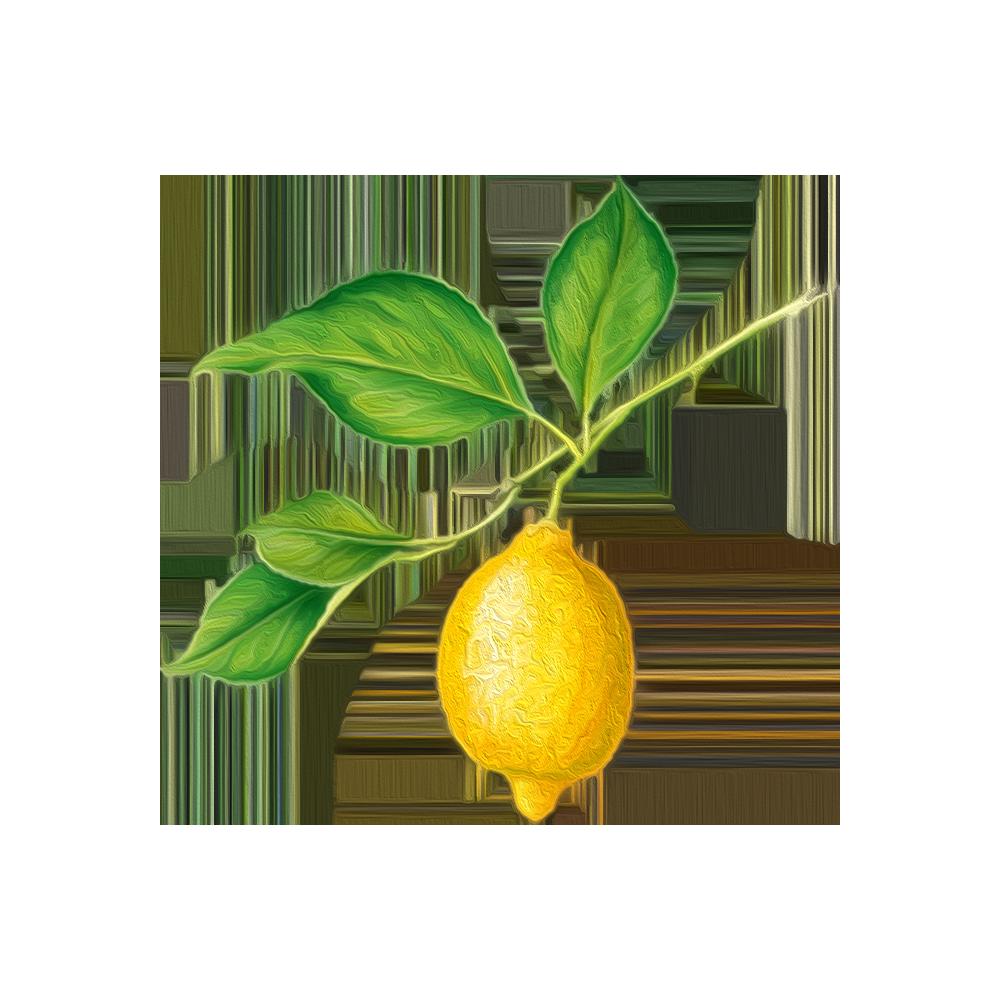Limone - BeC natura